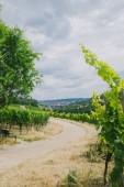 Fotografie Cesta do města a vinice na stranách v Würzburg, Německo