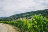 krásné zelené vineyard, silniční a hill v Würzburg, Německo