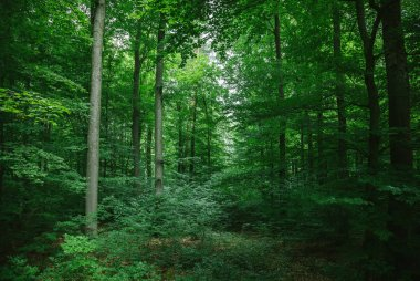 beautiful leafy trees in forest in Wurzburg, Germany