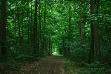 path in green dark forest in Wurzburg, Germany