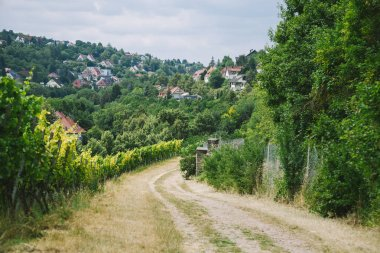 Rural road to village and vineyard with trees on sides in Wurzburg, Germany stock vector