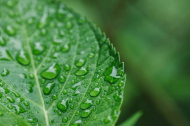 Close up view of water drops on green leaf stock vector