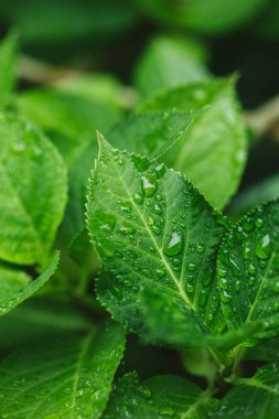 close up view of green leaves with water drops