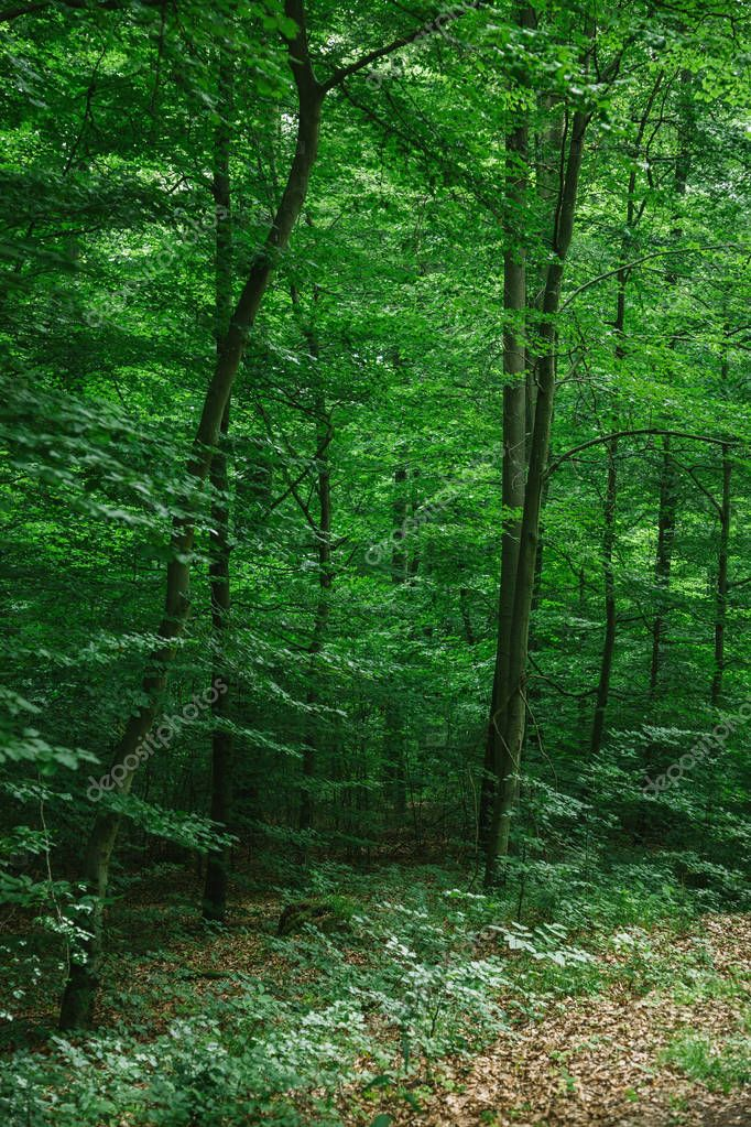 beautiful trees with green foliage in forest in Wurzburg, Germany