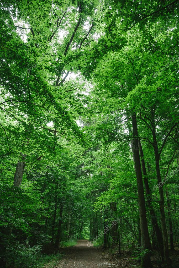 path in beautiful forest, trees with green leaves in Wurzburg, Germany