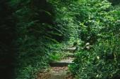 schodiště v krásném lese se zelenými stromy v Hamburku, Německo