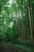 Pfad in der Nähe von grünen Bäumen in schönen Wald in Hamburg, Deutschland