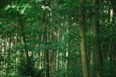 malerische Aussicht von grünen Bäumen im Wald in Hamburg, Deutschland