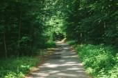Fotografie silnice v krásném zeleném lese v Hamburku, Německo