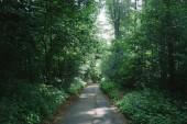 Fotografie silnice mezi zelenými stromy v krásném lese v Hamburku, Německo