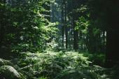 stromy v krásném lese slunečním záření v Hamburku, Německo