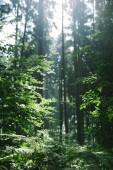 zelené stromy v krásném lese slunečním záření v Hamburku, Německo