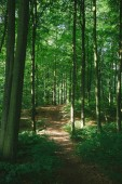 Fotografie trees and path in beautiful green forest in Hamburg, Germany
