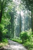 silnice v krásném zeleném lese v Hamburku, Německo