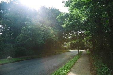 Road between trees under sunlight in Hamburg, Germany stock vector