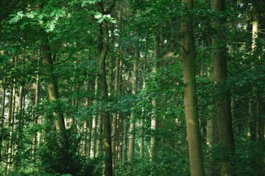 scenic view of green beautiful trees in forest in Hamburg, Germany