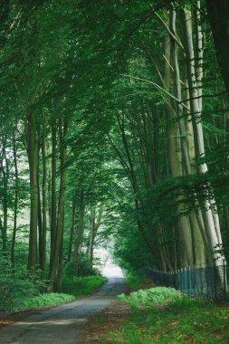 Road near beautiful green trees in park in Hamburg, Germany stock vector