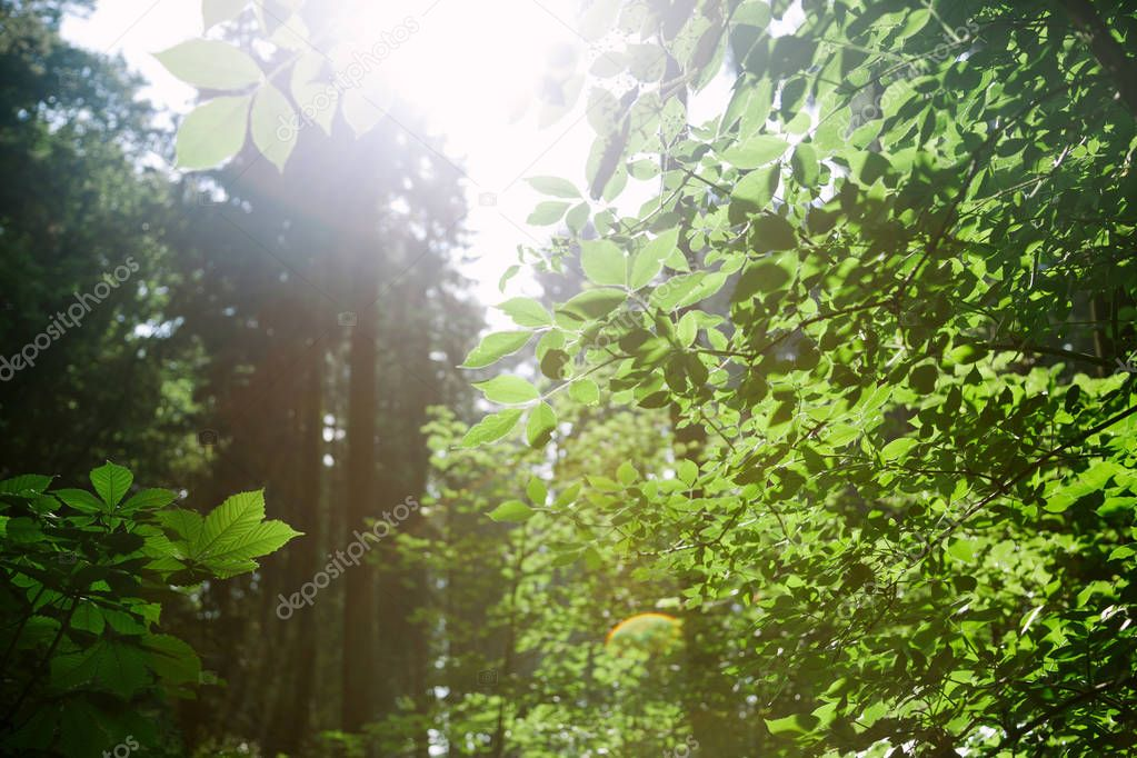 trees with green leaves in forest under sunlight in Hamburg, Germany