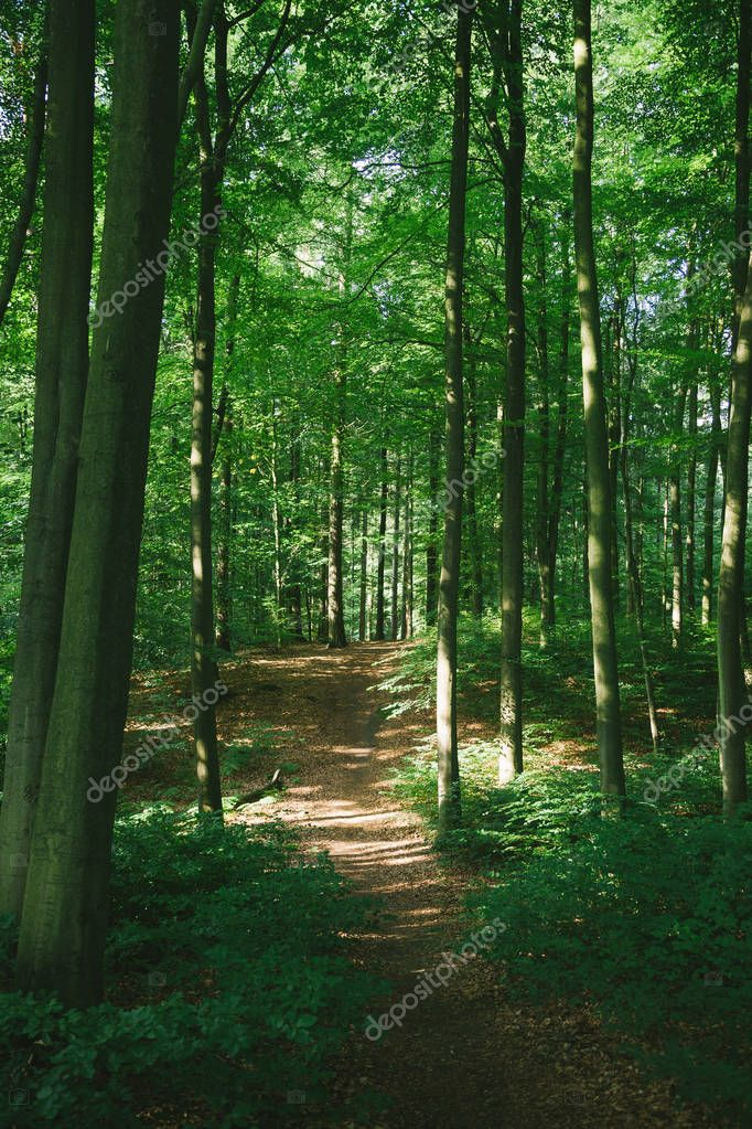 trees and path in beautiful green forest in Hamburg, Germany