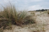 close-up shot of green grass in desert at Bray Dunes, France