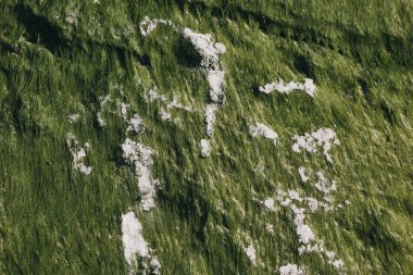 close up of green texture with seaweeds and sand