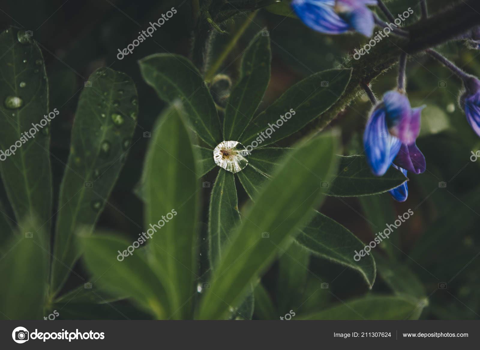 Цветок падает в воду