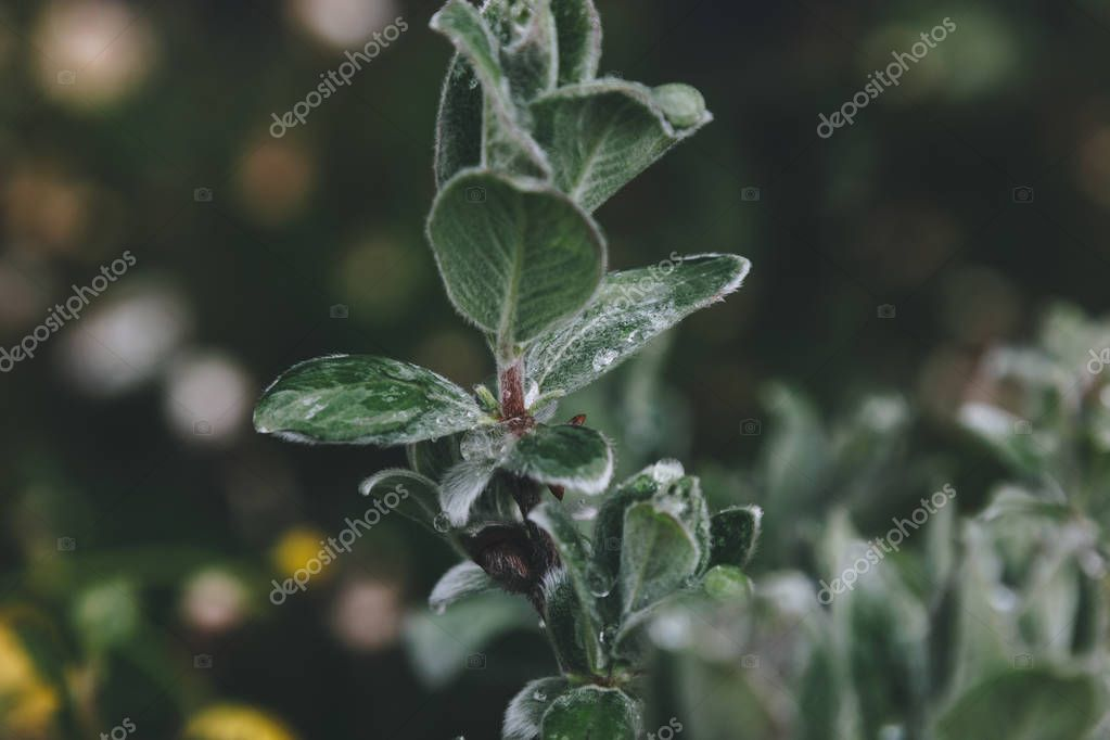 selective focus of green leaves on blurred background