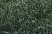 Fotografie tráva