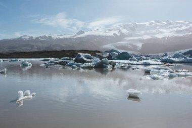 Scenic shot of melting glacier ice floating in lake in Fjallsarlon, Iceland stock vector