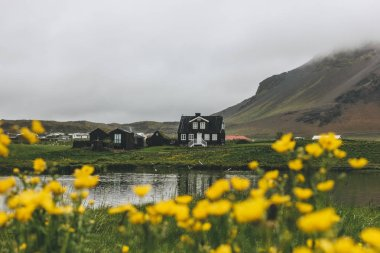 Black house on green hill in Iceland with yellow field flowers on foreground stock vector