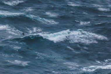 dramatic shot of bird flying over wavy blue ocean