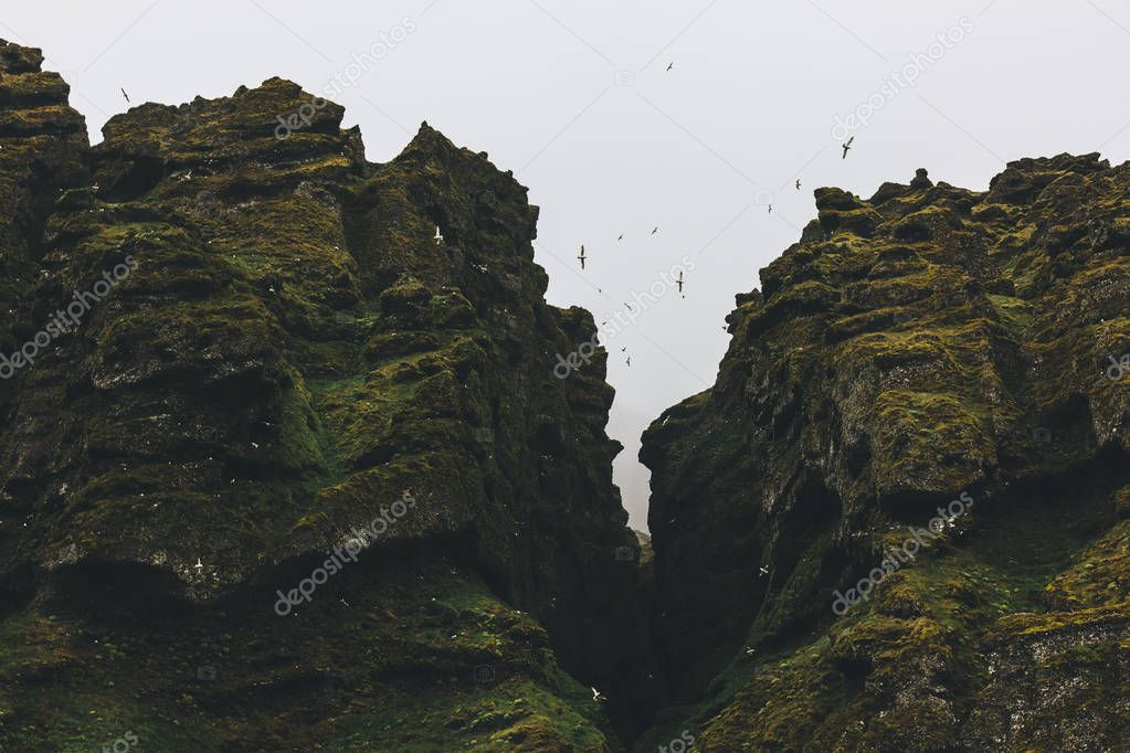bottom view of seagulls flying around mossy rocks against cloudy sky in Iceland