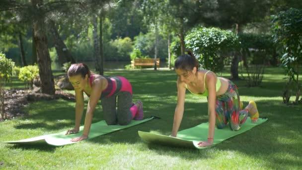 Slim fitness žen dělá prkno cvičení v parku