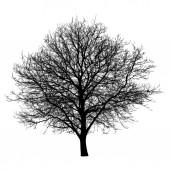 Sagoma nera albero isolato su priorità bassa bianca. Oggetto di natura