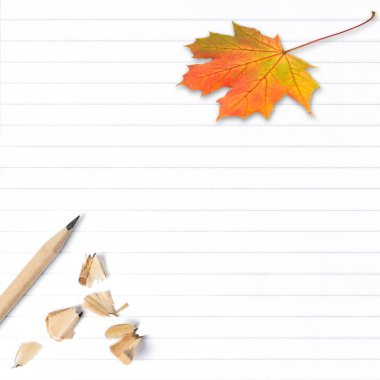 Exercise book page with autumn maple leaf. School background stock vector