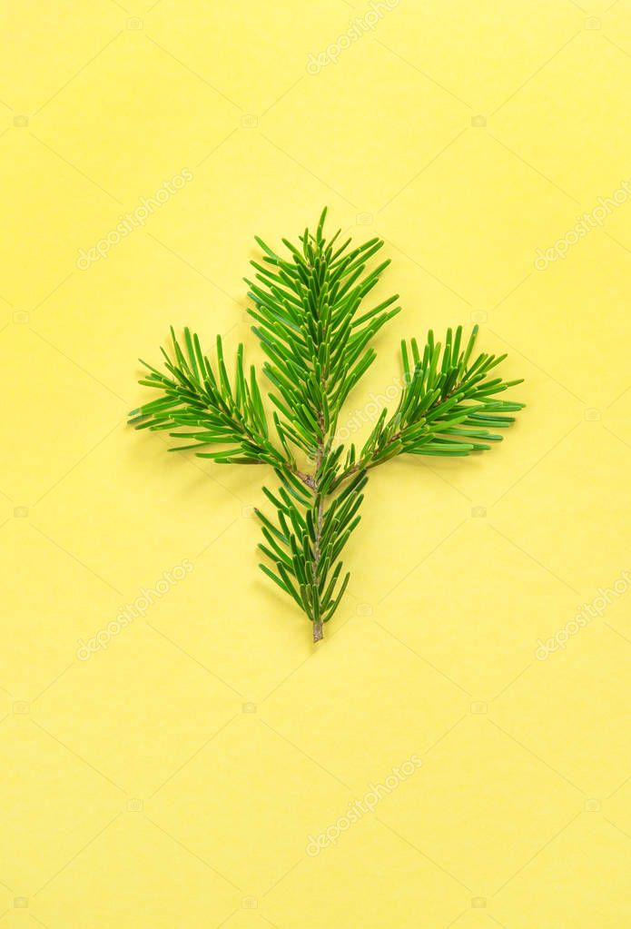 Christmas tree branch on yellow background. Minimal flat lay