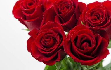 Red roses on white background. Valentines Day or Wedding card