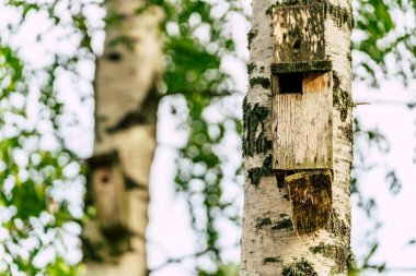 A Closeup of the Birdhouse on a Birch Tree on Early Sunny Spring Day