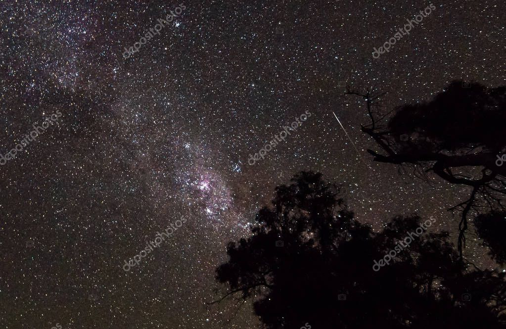 Long exposure of the night sky showing the clouds of the Milky Way Galaxy and a shooting star, as seen over the trees in the Wilsons Promontory National Park, Victoria, Australia.