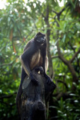 Macaque opice sedí na dřevě v zoo