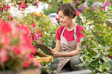 Young serious female florist in apron searching in the net for new sorts of garden flowers among growing plants