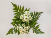 Banda bílých květin na bílém pozadí