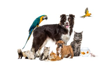 Group of pets posing around a border collie; dog, cat, ferret, rabbit, bird, fish, rodent stock vector