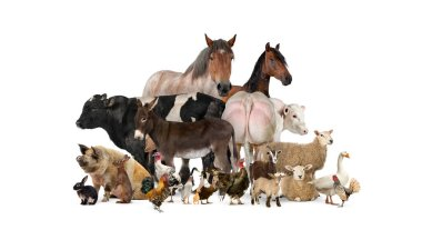 Group of many farm animals standing together stock vector