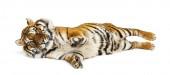 Tygr leží na zádech izolovaný na bílém