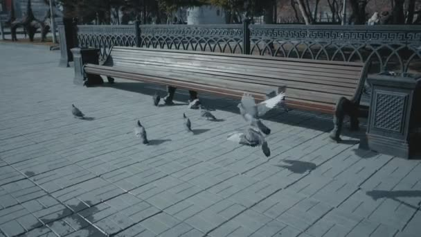 Growth doll bird scatters pigeons. A man in a swift suit runs. An animator in a bird costume attacks a flock of pigeons. Slow motion.