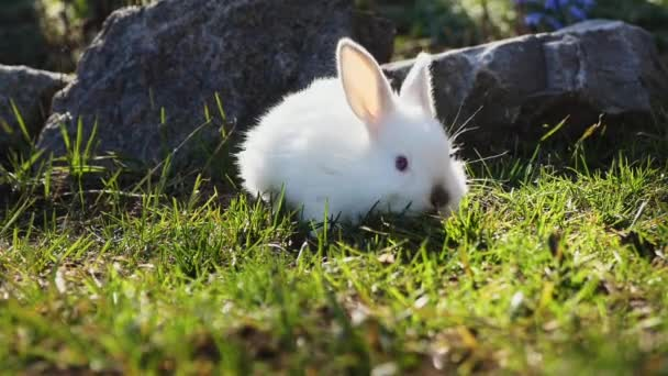 Easter white bunny on green grass in spring