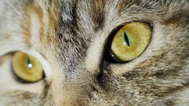 Extreme macro close-up of a cats eye