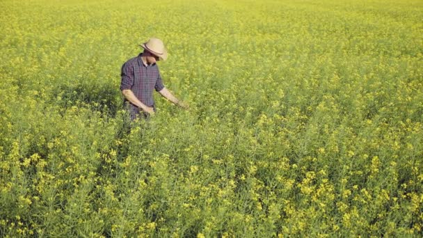 Farmer examining rapeseed blooming plants, male hand of an agronomist in cultivated oilseed rape field