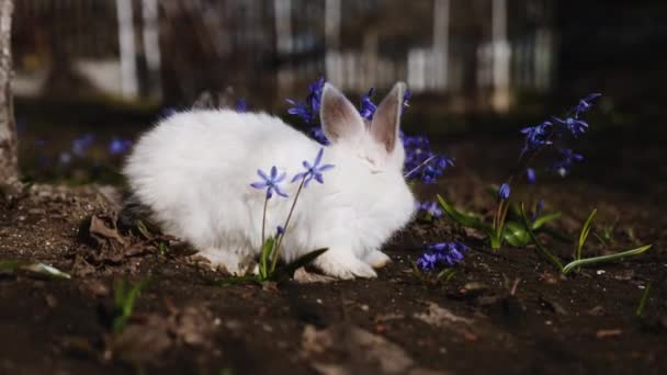 Video of small white rabbit outdoors